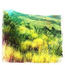Utah-grass