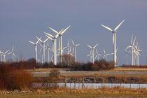 Windkraft-33