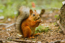 red squirrel by Yuliya Belonosova