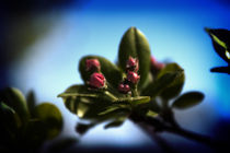 Spring Mood von Milena Ilieva