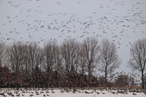Flug der Wildgänse - Flight of the Wild Geese by ropo13