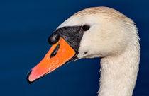 Swan Up Close von Keld Bach