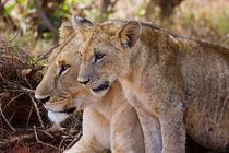 Mama & Mtoto Simba by Carinne Gamas