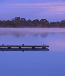 Misty Morning at Muckross by John McCoubrey