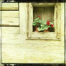 Flower Box by Jenny Allport