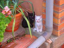 Katzenkinder by daniid