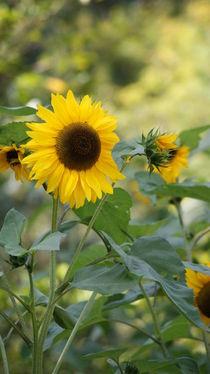Der Gruß der Sonnenblume by Sylvia Raetsch