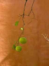 Orangenbaum by Paul Artner