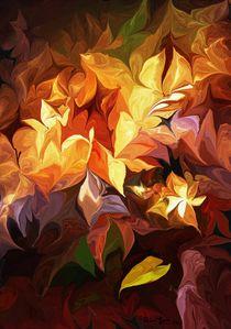 Garden Glow by David Lane