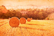 Fields of Gold by Dawn Cox