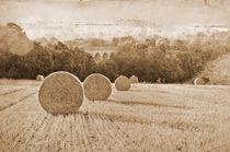 Wheat Fields von Dawn Cox