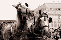 Performing Horses by mosfotostudio