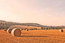 Wheat-fields-early-morning-0032