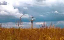 Storm's Coming von Milena Ilieva