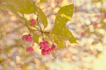 Soft Pink  Spindle berries by Dawn Cox