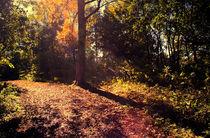Intense Autumn Colours by Dawn Cox
