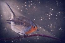 The little robin at the night von AD DESIGN Photo + PhotoArt
