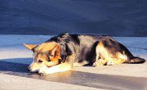 hund ruht auf der domplatte by elfriede zitas