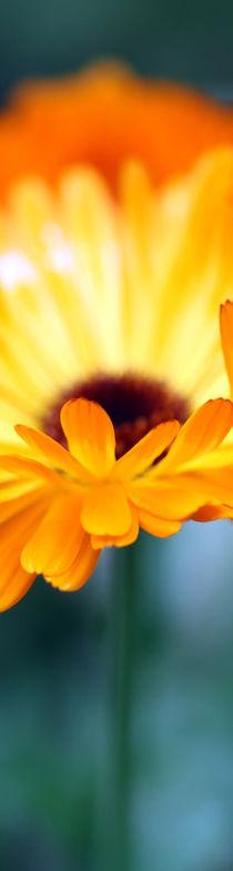 gelbe Blüte by Jens Berger