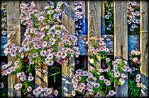 Fences and flowers nr.3 von Leopold Brix