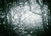Winter Wood von Sybille Sterk