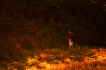 Deer in the Countryside von Dawn Cox