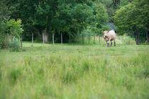 Rural landscape von Lars Hallstrom