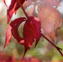Herbstfreude von Franziska Rullert