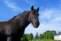 Tullyhommon Horse by John McCoubrey