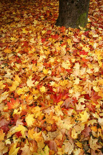 AUTUMN LEAVES 2 by John Mitchell