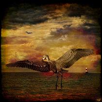 Herons von Chris Lord