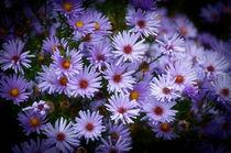 Blumengruß by Barbara  Keichel