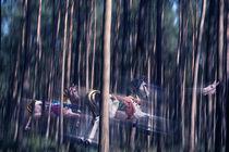 Waldpferde von pahit