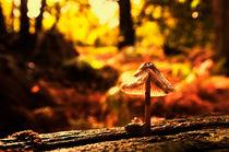 Autumn-knole-0065