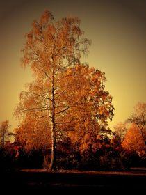 Goldener Herbst by Elke Balzen