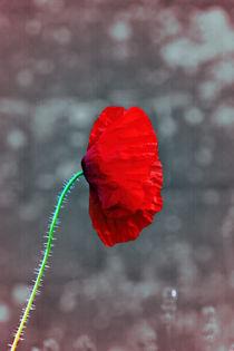 Poppy-wall