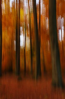 Autumn Trees by dagino
