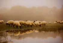 Sheep in the mist - 2 by ian hufton