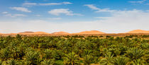 Date Palms and Sand Dunes by Russell Bevan Photography