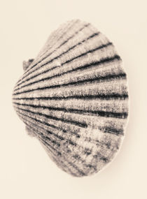 Seashell in sepia by Lars Hallstrom