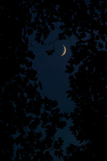 Crescent moon in the dark forest by Lars Hallstrom
