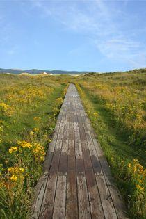 Ynyslas-walkway