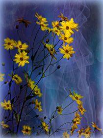 Gelbe Blüten by Elke Balzen