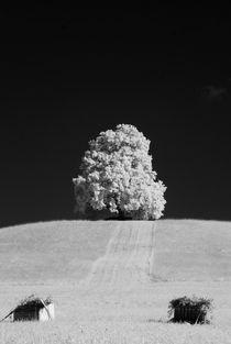 Linde-2 by Klaus Schäfer