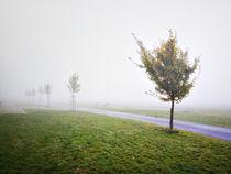 Trees von Arseny Sigarev