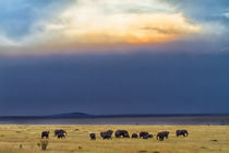 Herd of elephants just before the rain by Maggy Meyer
