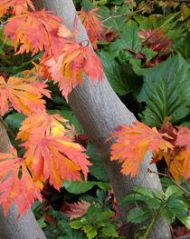 Blätter im Herbst von lorenzo-fp