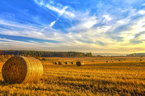 Halcyon Harvest Days by Derek Beattie
