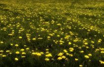 Sommerwiese  von Barbara  Keichel