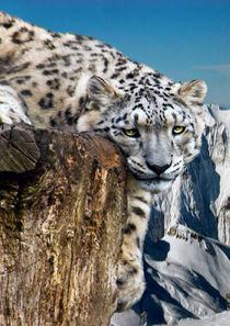 Leopard-on-tree